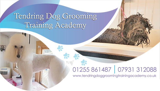 Level  Dog Grooming Courses Essex