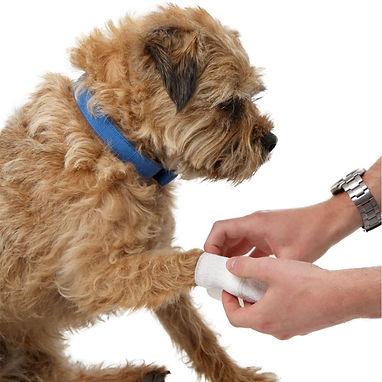 Tendring Dog Grooming