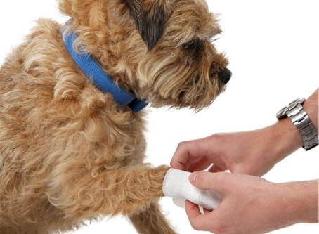 Heavenlyz Pet First Aid