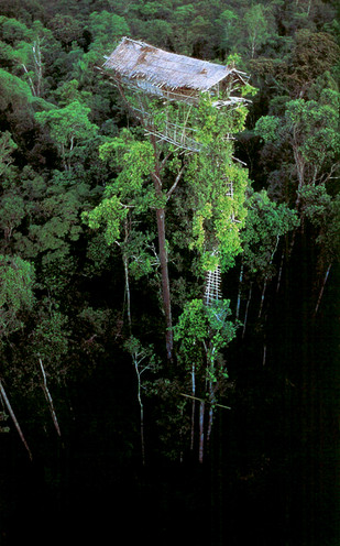 Canopy Resort Inspiration Image courtesy of National Geographic