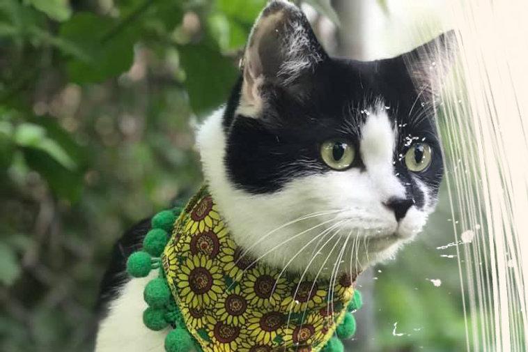 Cat_Hero_Scratch_Beige.jpg