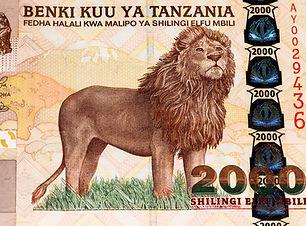 African Lions_1.jpg