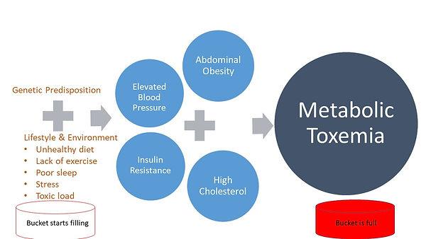 Metabolic toxemia.jpg