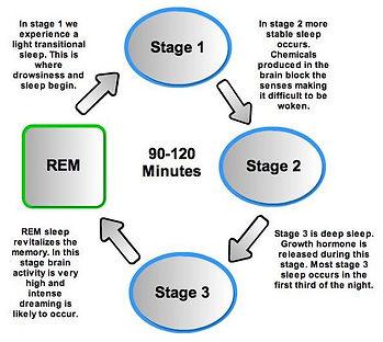 sleep stages.jpg