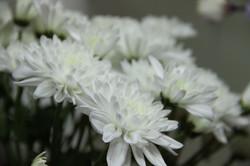 הזמנת פרחים באינטרנט
