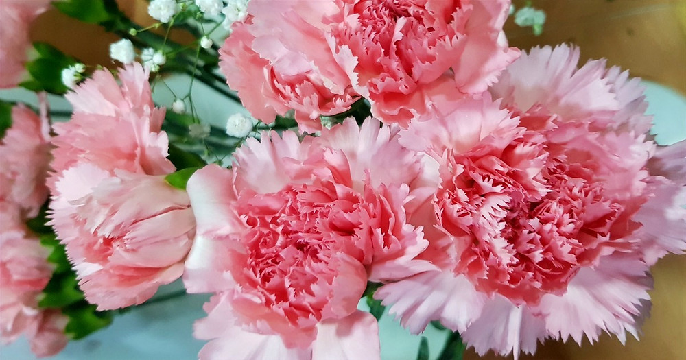 Bouquet of fresh carnations