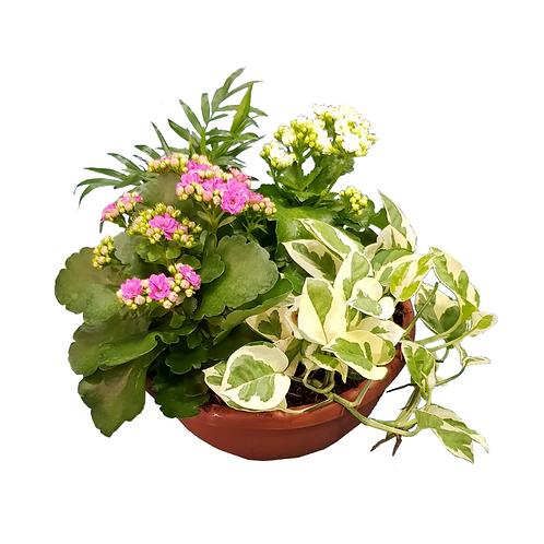 קוקטייל צמחים - צמחי בית - עציצים פרחי אתי