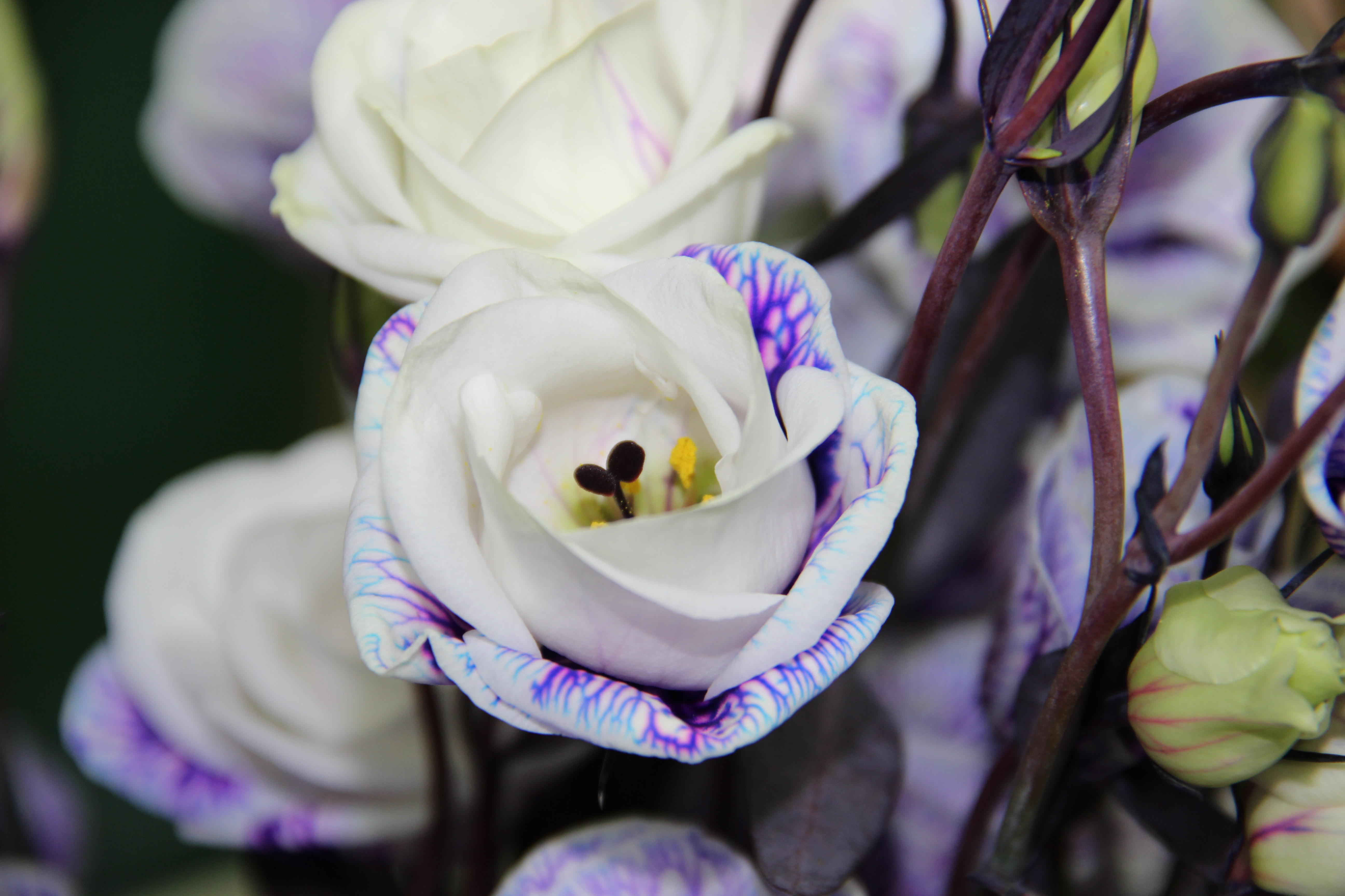 פרחים ליום הולדת