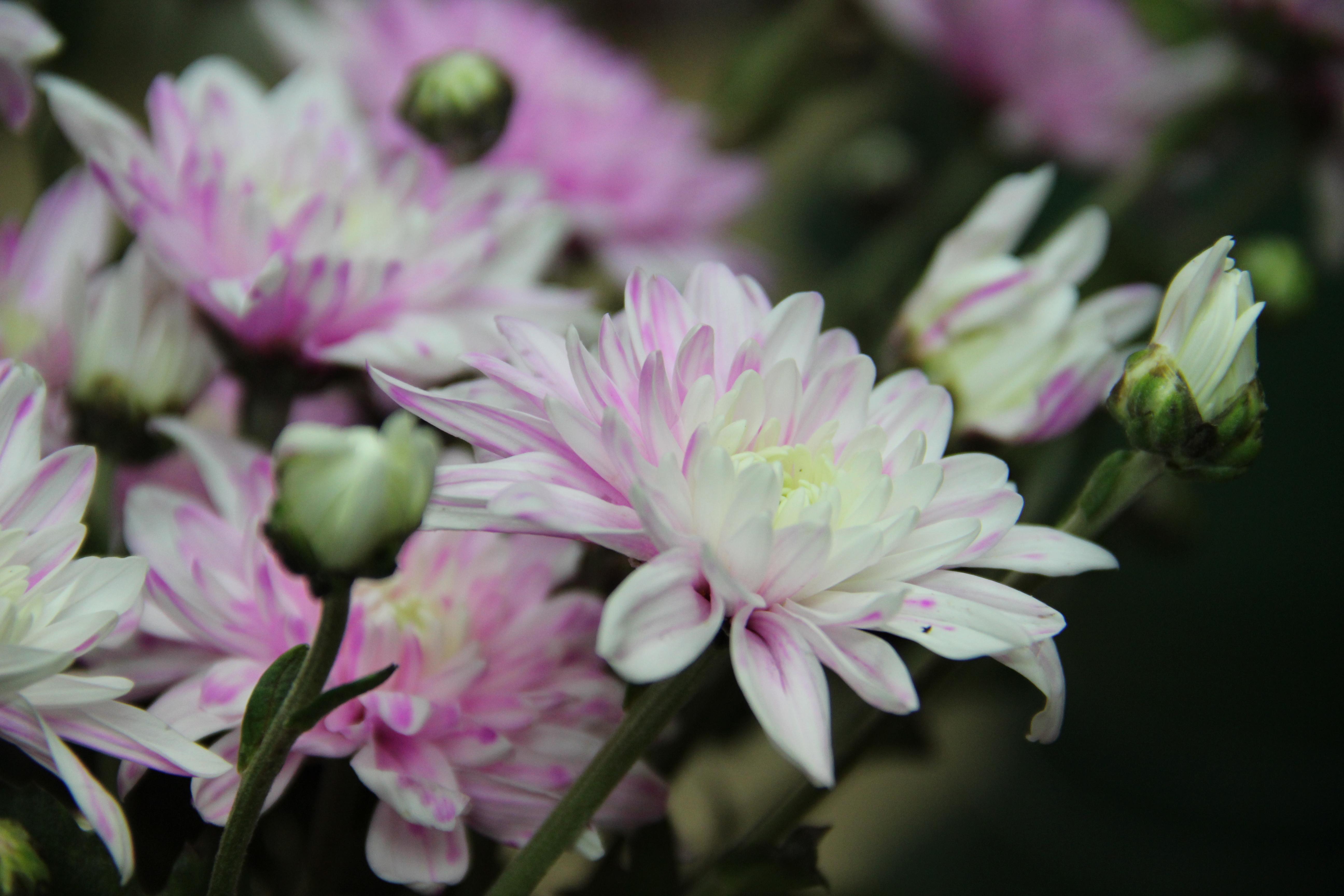 משלוח פרחים כרמיאל