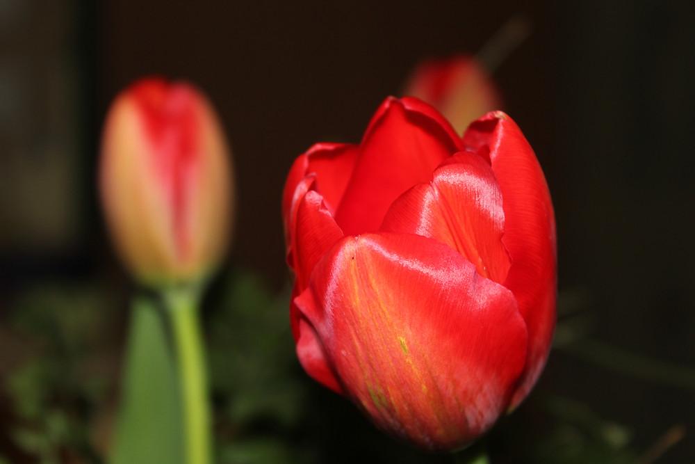 משלוח צבעונים וזרי פרחים