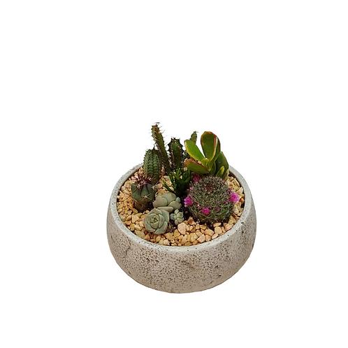6 cactus cocktail in a designed concrete vessel
