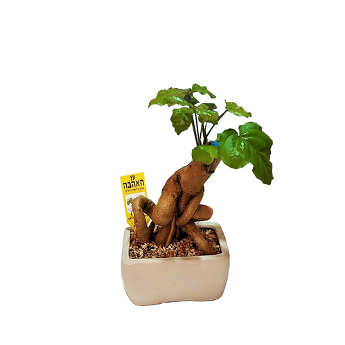 The love tree for home and office