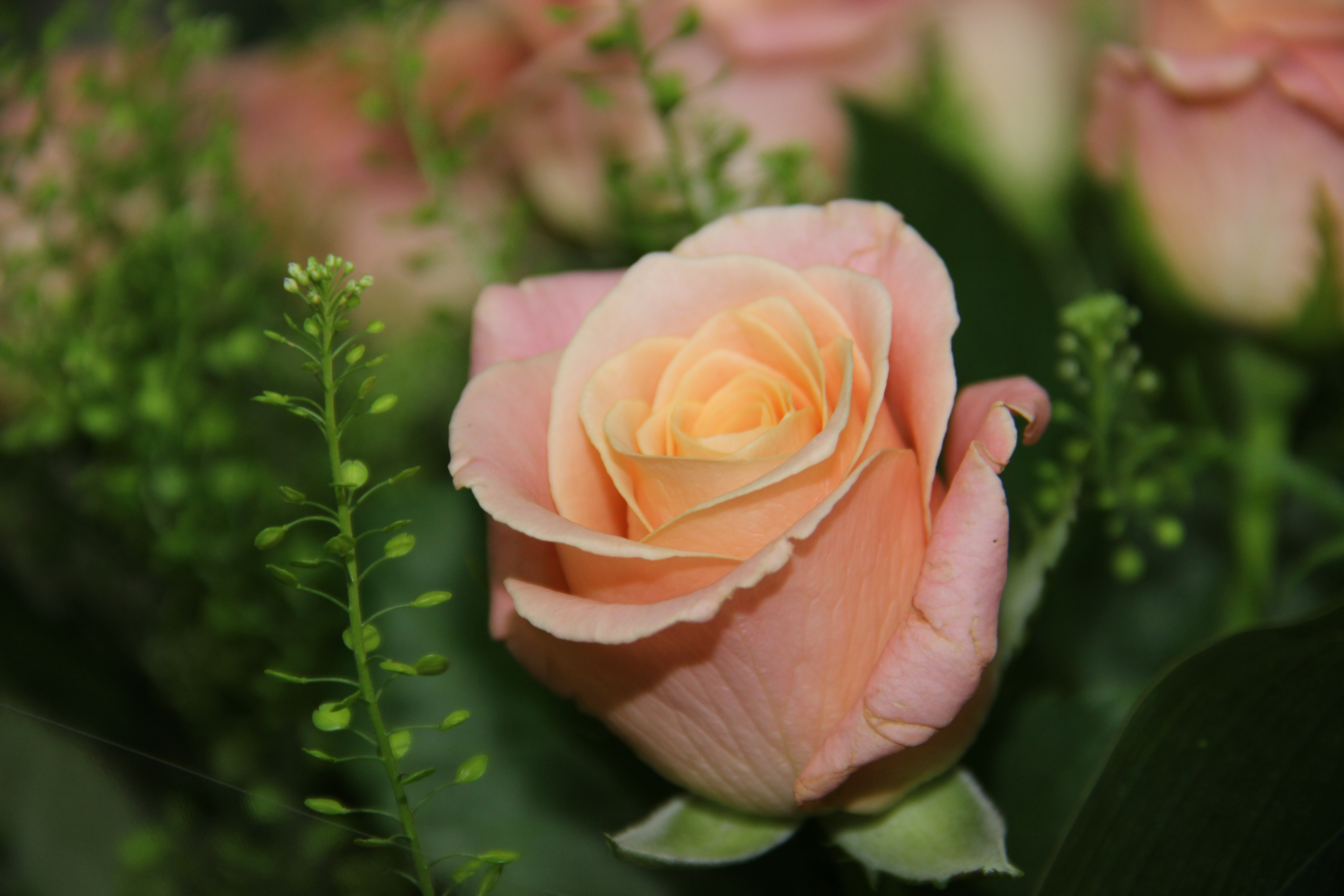 פרחי כלה