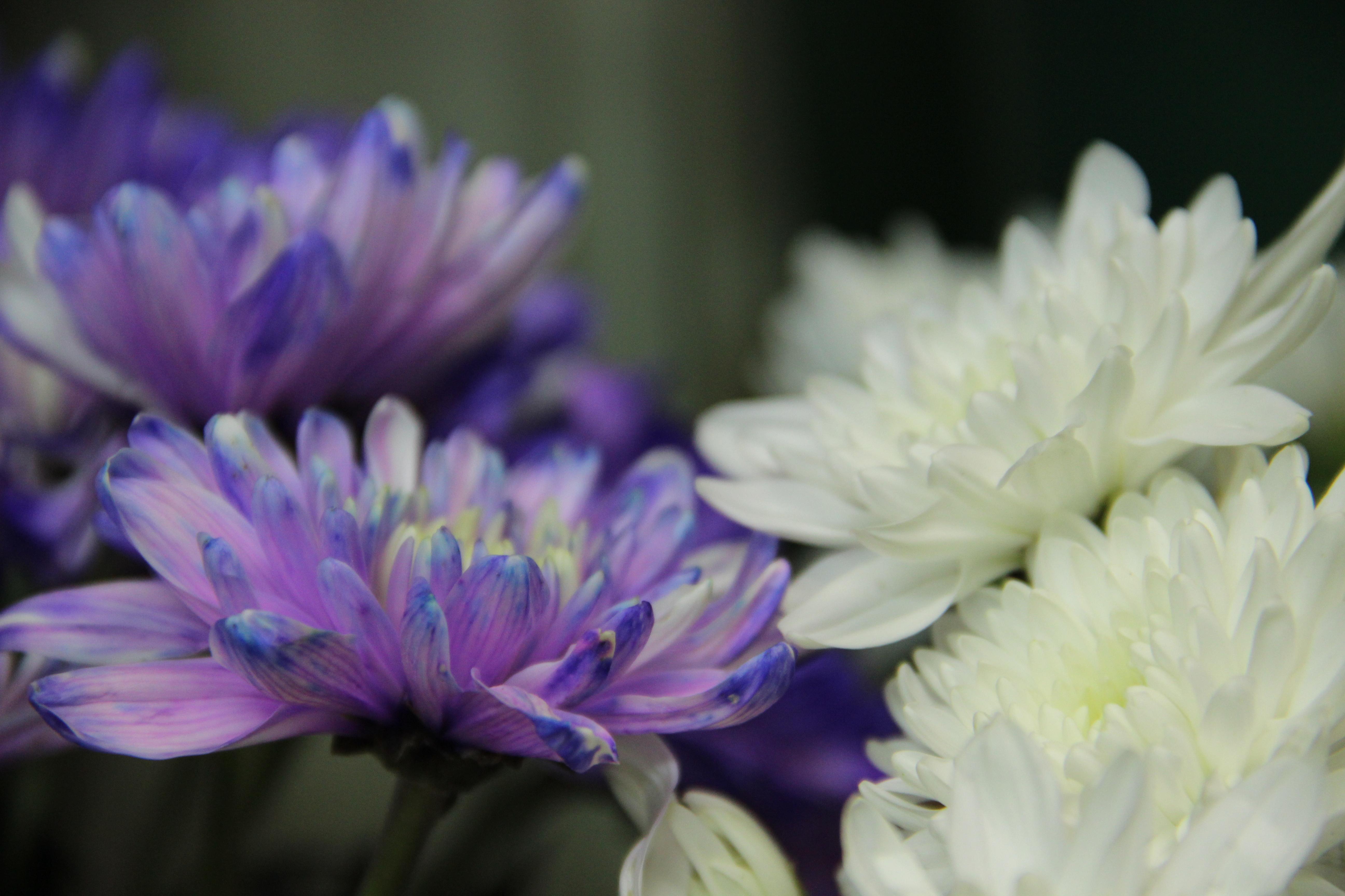 חנות פרחים בכרמיאל