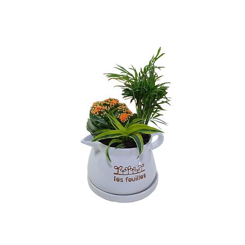 קוקטייל צמחים שתול בכלי - צמחי בית - עציצים פרחי אתי