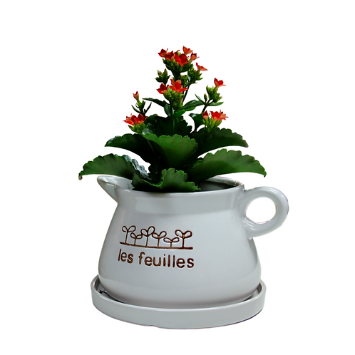 מיקס כפרי בכלי מיוחד - צמחי בית - עציצים פרחי אתי