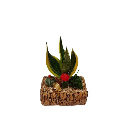 4 cactus cocktail in a designed ceramic vessel