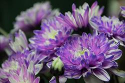 פרחים להזמנה