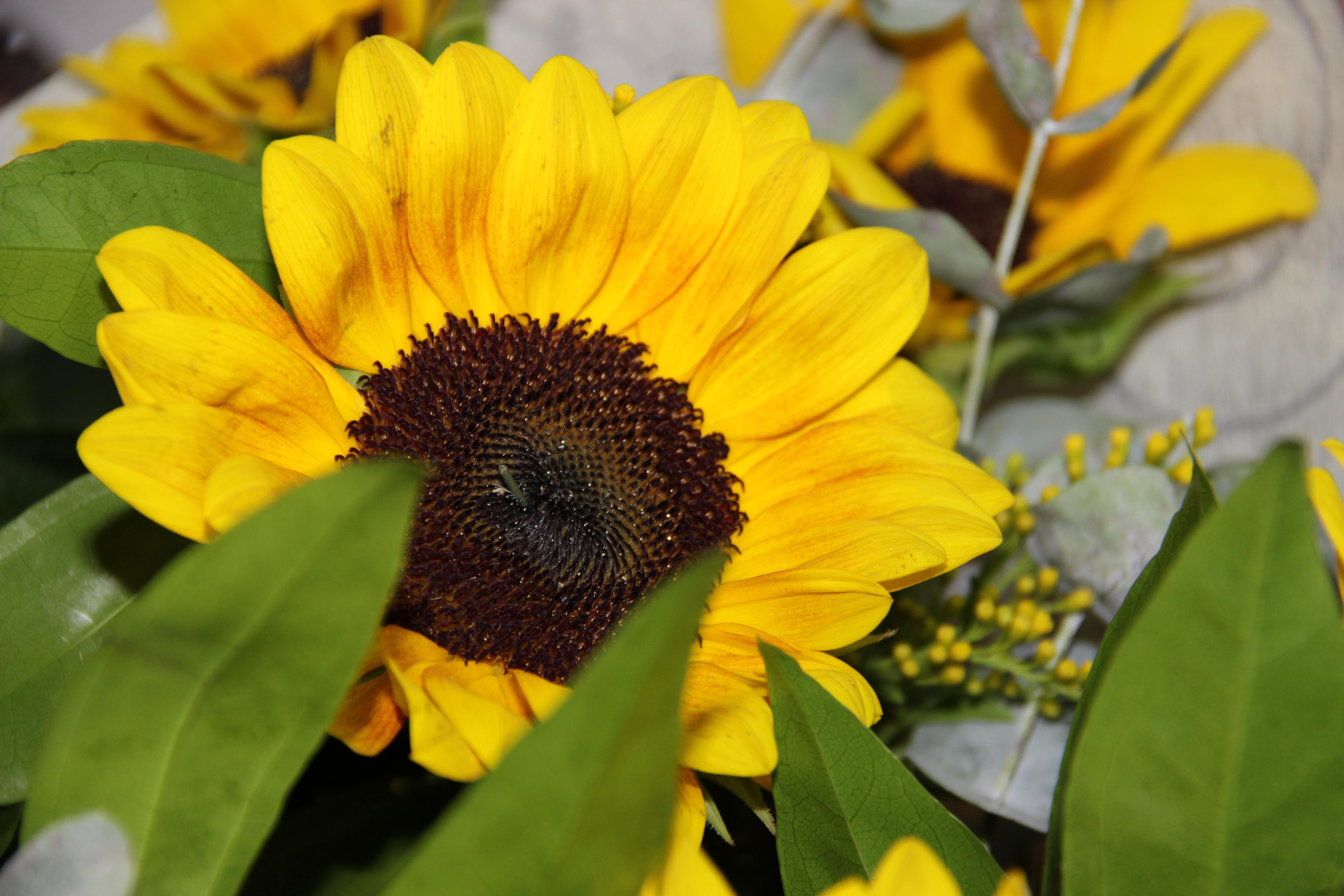 משלוח זר פרחים