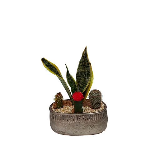 4 cactus cocktail in a decorated pottery
