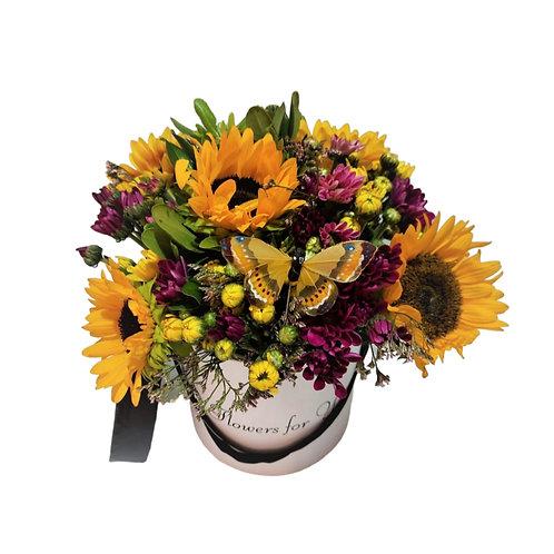 סידור מפרחים חמניות וחרציות בקופסא מתנה