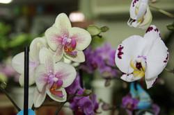 משלוח פרחים בכרמיאל