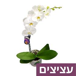 flowers-pots.png