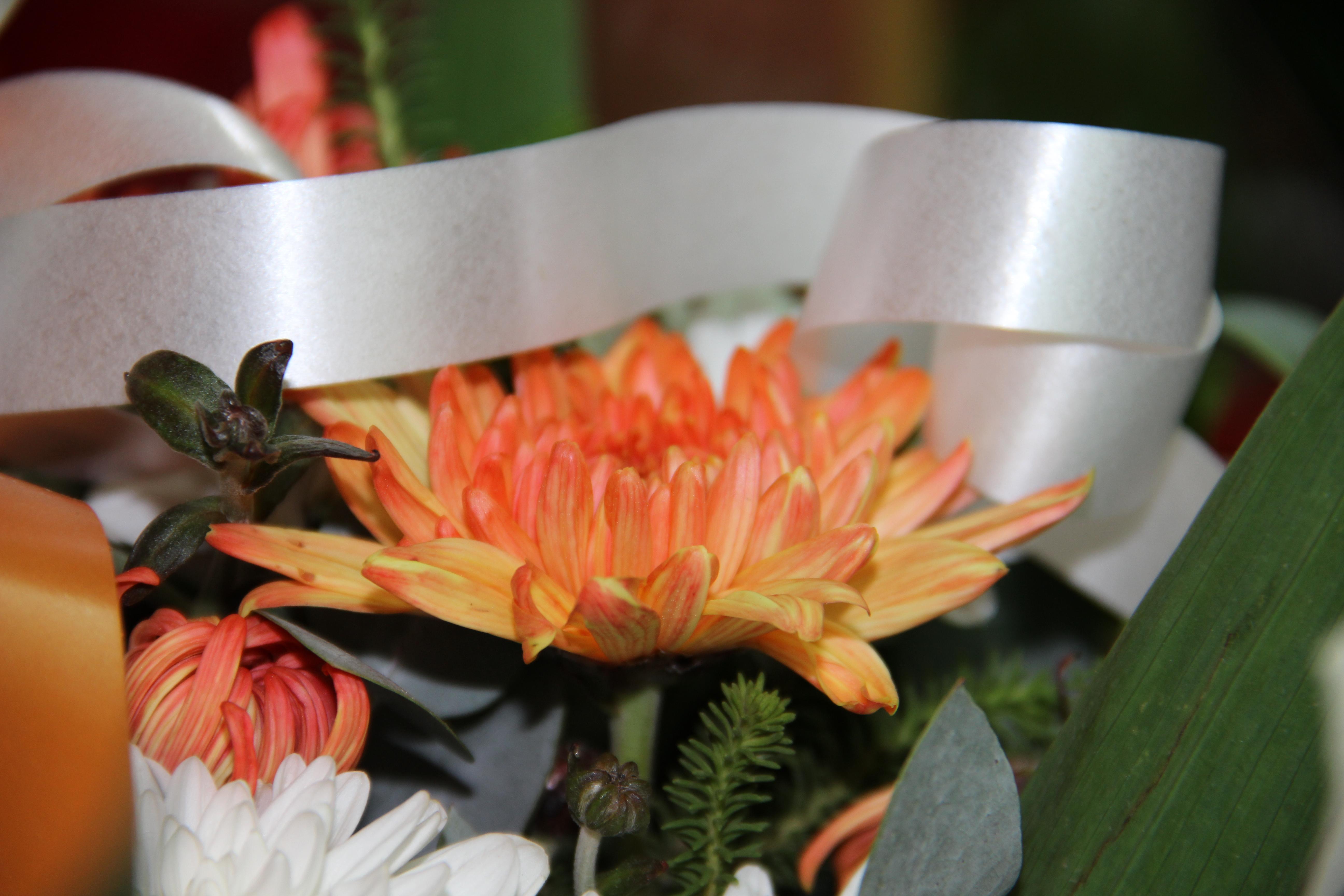 הזמנות פרחים