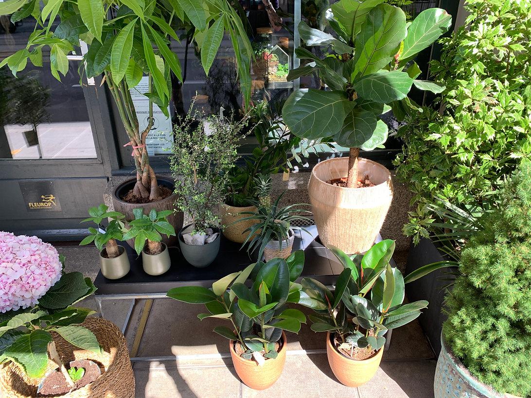 Pearl bar a plante.jpg