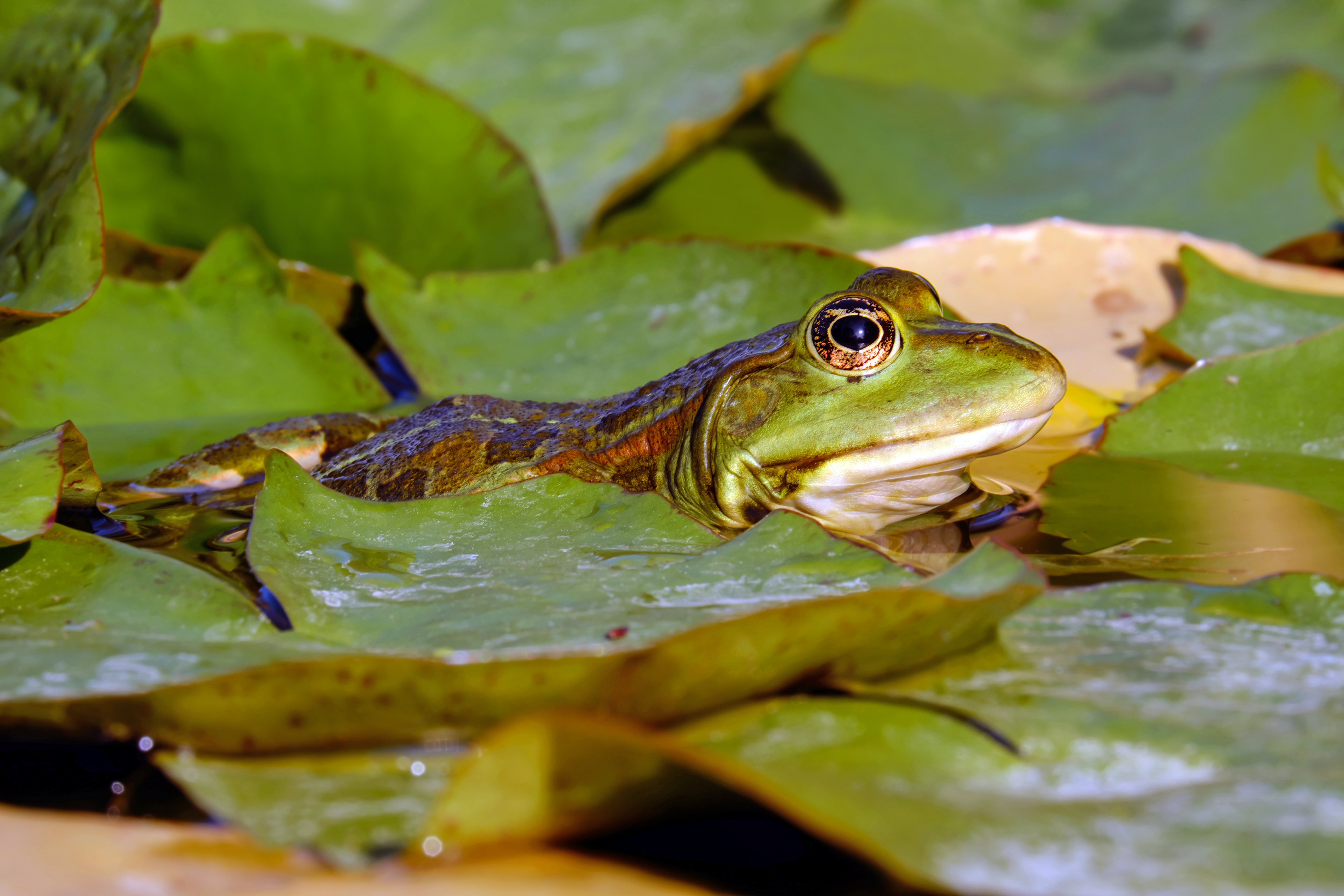 frog-2240729