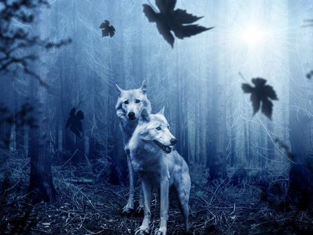 Lobo de mim