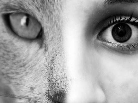 Humano ou gato?