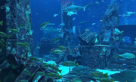 underwaterworl.jpg