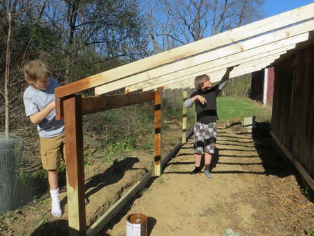 Building a New Chicken Coop