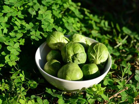 Nutritivo y anticancerígeno vegetal de temporada