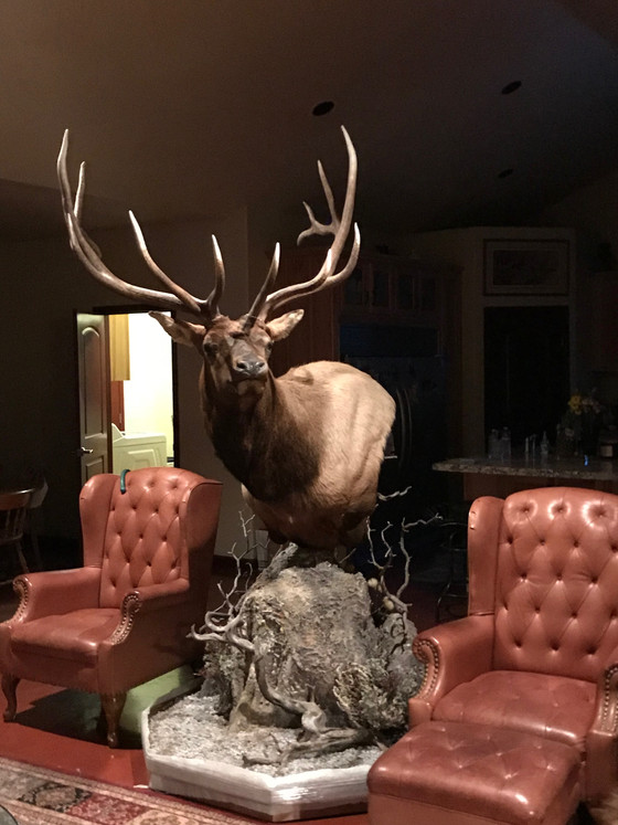 Hunting Success: A Story and Photo Behind a Shoal Creek Elk Mount.