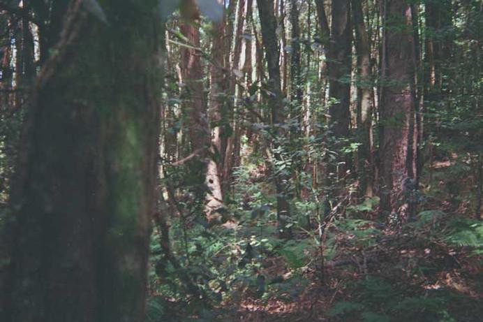 analogica_bosque.jpg