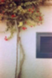 analogica_rosal.jpg