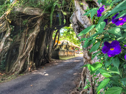 Bunut Bulong road through tree