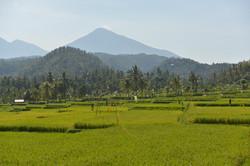 West Bali scenic road-7