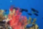 snorkel dive bali west bali menjangan island