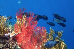 Diving and snorkelling in Pemuteran