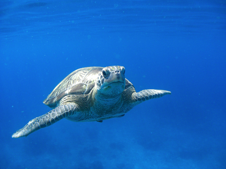 Snorkel and dive Pemuteran