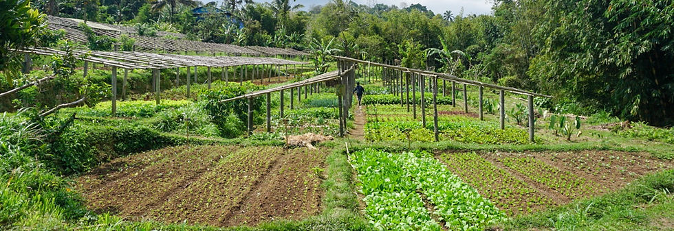 Temuku organic farm.jpg
