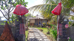 Bali Tiger Medewi-9