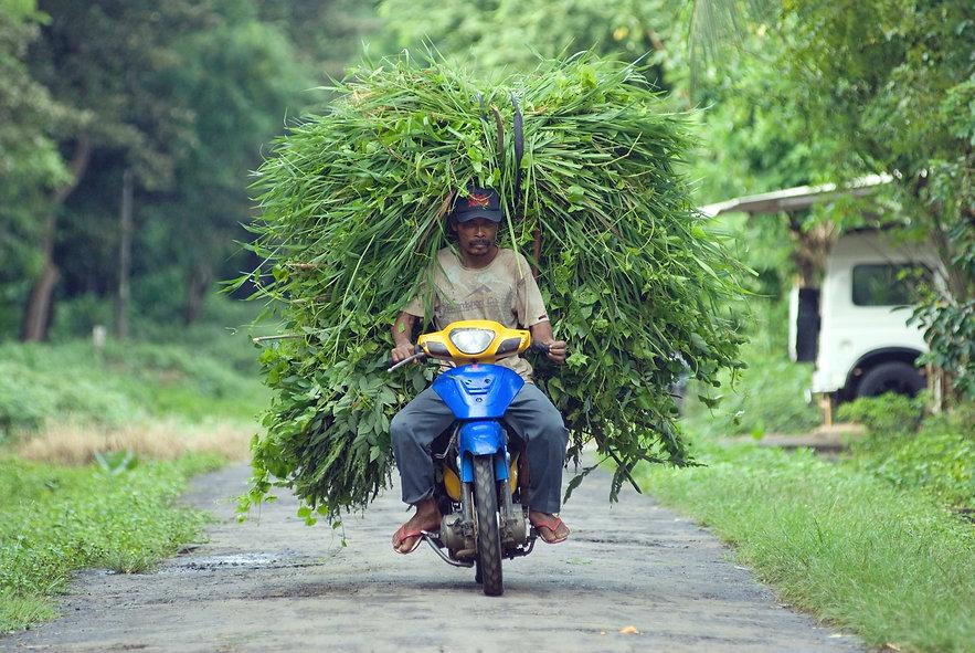 West Bali Transport.jpg