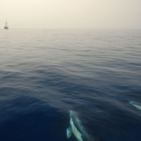 """MEDITERRANEAN for Earthwatch 