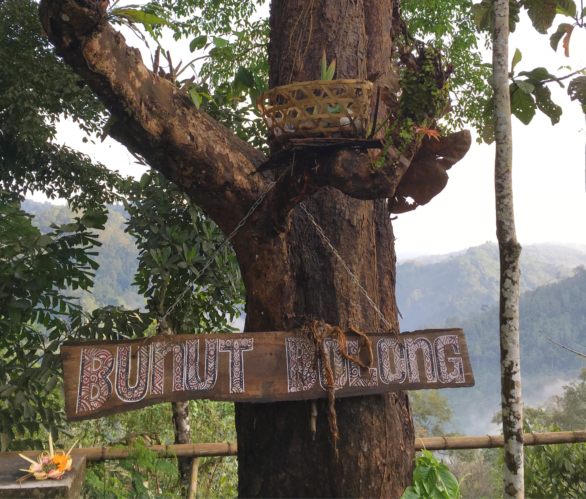 Bunut Bulong sacred tree West Bali