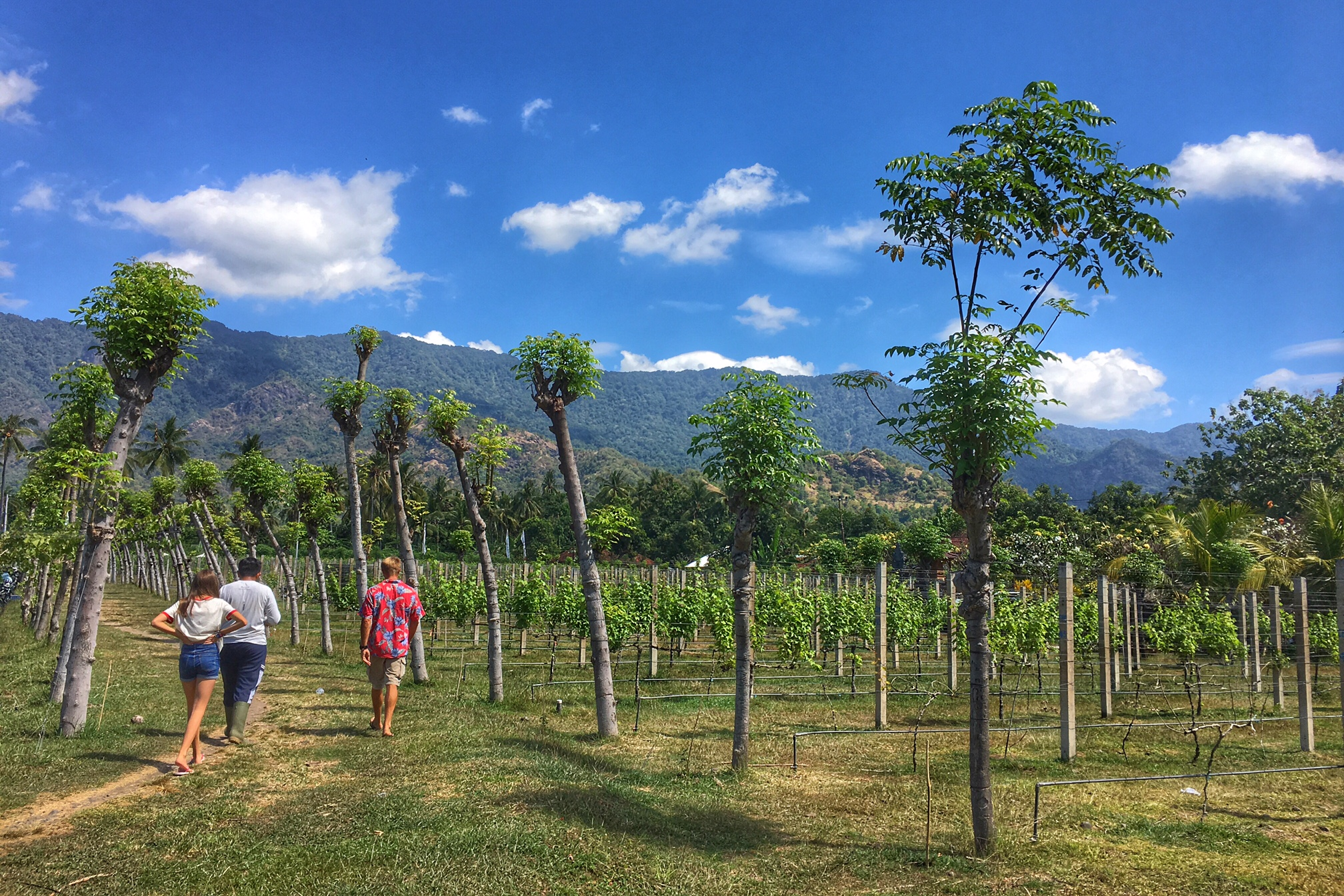 Wine tasting in Pemuteran