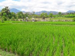 Umma Bali Menjangan Retreat-7